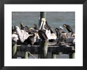FotoSketcher - CedarKey Birds
