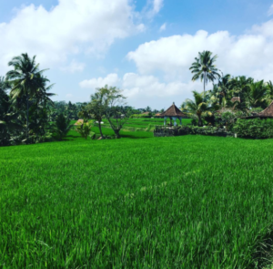 Travel - Bali, Indonesia